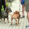 Obowiązki właścicieli psów