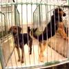 Program opieki nad zwierzętami