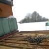 Pszczoły zimą