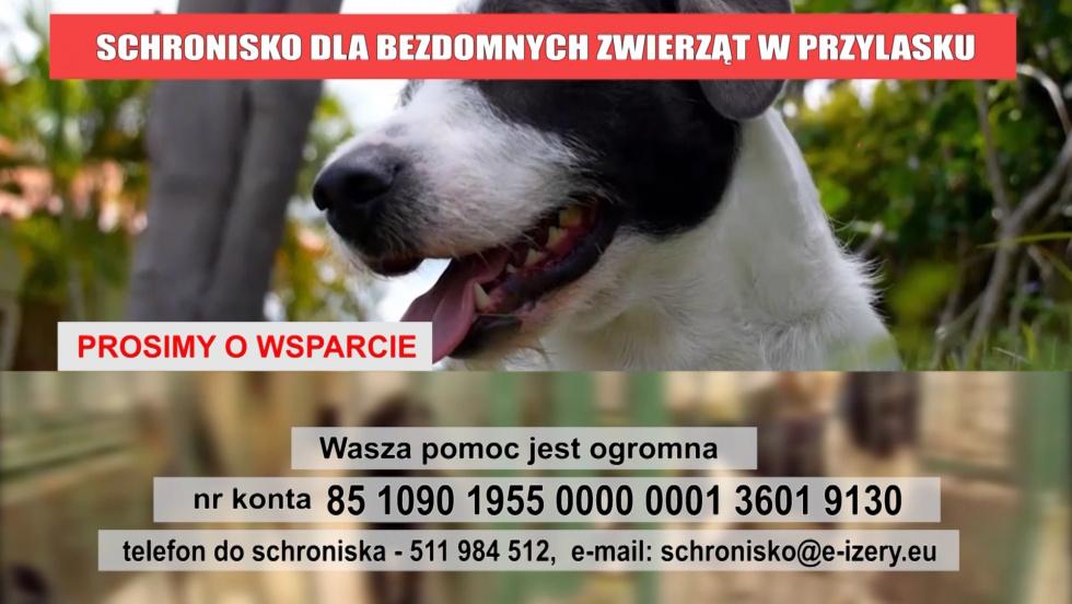 2167_schronisko_w_przylasku_5zg7xn3t3j40s0w0k_.mp4